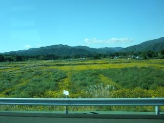 福島 3.jpg